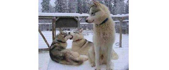 光棍节到了!单身狗的呐喊:《情侣是不可能在一起的》!